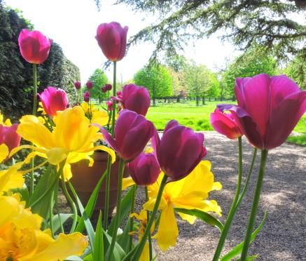 Garden Colour at Charlecote Park